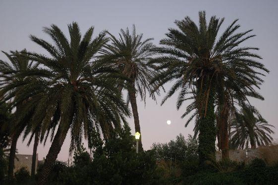 Помимо сосен и кипарисов на острове растут вот такие пальмы