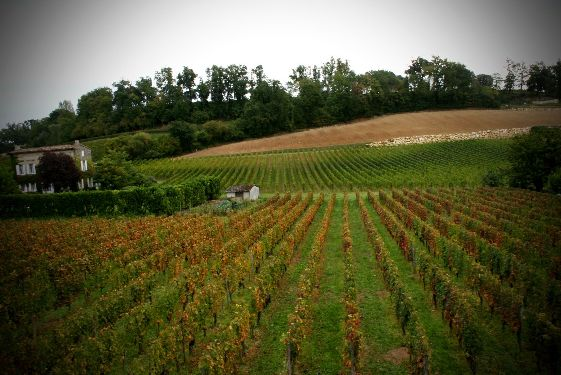Каждый год виноградники Родоса дают щедрый урожай